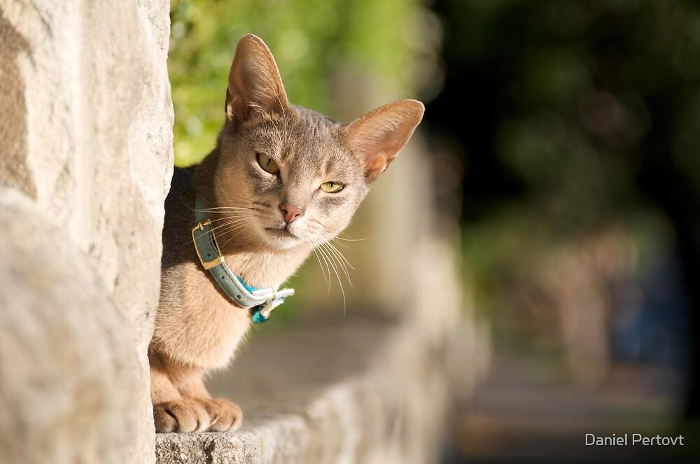 Mosman cat by Daniel Pertovt