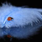 Blue feather lady by Lyn Evans