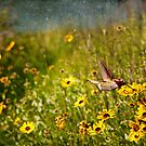 Allen's Hummingbird and California Sunflowers by Susan Gary