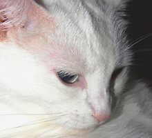 Unforgettable kitty by ♥⊱ B. Randi Bailey