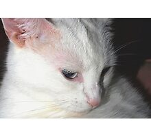Unforgettable kitty Photographic Print