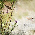 Hummingbird Garden Textured by Susan Gary