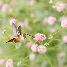 Hummingbird and Pink Wildflowers by Susan Gary