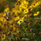 Hummingbird and California Sunflowers by Susan Gary