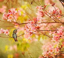 Allens Hummingbird with Spring Blossoms by Susan Gary