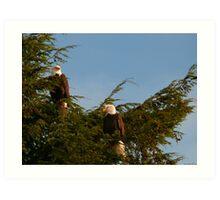 Two Bald Eagles  Art Print