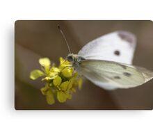 White Butterfly Metal Print