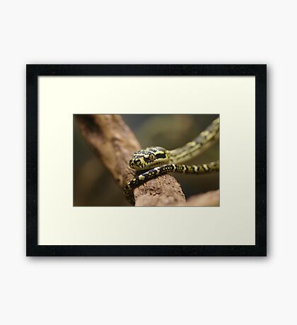 Head and Tail Framed Print