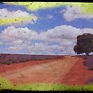 Lavender Road by oddoutlet