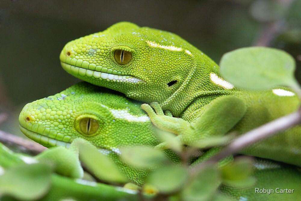 Wellington Green Gecko by Robyn Carter