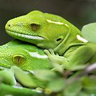 Wellington Green Gecko by Robyn Carter