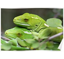 Wellington Green Gecko Poster