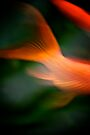 Good Fortune by Renee Hubbard Fine Art Photography