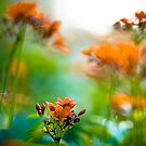 Orange meet green: On Featured : Point and Shooters group by Kornrawiee
