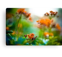 Orange meet green: On Featured : Point and Shooters group Canvas Print