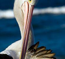 Pelican Preen by clydeessex