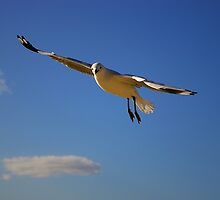 Another Seagull (floating & turning) by Robert  Welsh