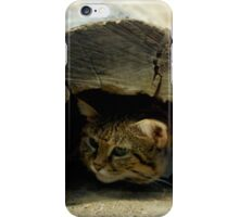 Funky African Black-footed Cat iPhone Case/Skin