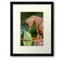 Headless mating mantis - detail Framed Print