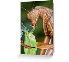 Headless mating mantis - detail Greeting Card
