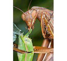 Headless mating mantis - detail Photographic Print