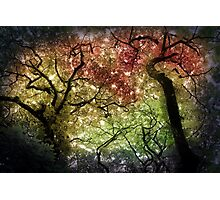 Autumn Tree Canopy Photographic Print
