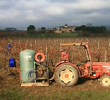 Pruning the vines near Capestang France by Paul Pasco