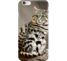 Cool African Black-footed Cat iPhone Case/Skin
