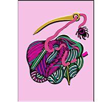 lio rosa Photographic Print