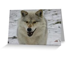 Happy and Alert Wolf Greeting Card