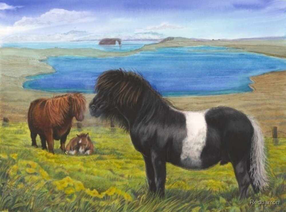 Shetland Ponies at Eshaness, Shetland by Redbarron