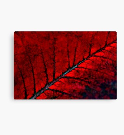 Nature on Fire Canvas Print