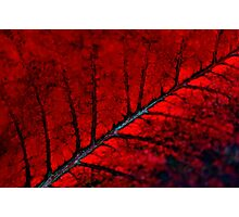 Nature on Fire Photographic Print