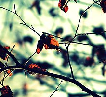 Aqua Leaves - Ashridge Woods by Erin Mason