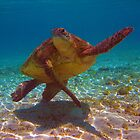Green Turtle by James Hall
