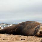 Sleepy Seal by James Hall