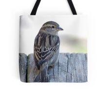 House sparrow sits on a weathered step Tote Bag