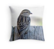 House sparrow sits on a weathered step Throw Pillow