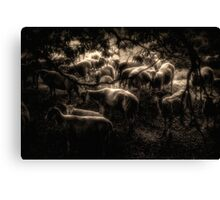 Hiding Sheep Canvas Print