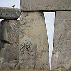 Blackbird @ Stonehenge by SoulSparrow