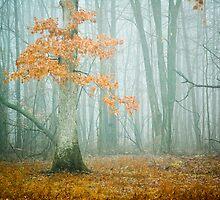 Oak in Fog by O. Joy