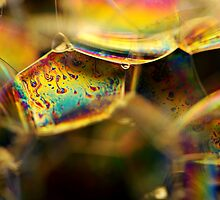 A Rainbow in Macro Land by BobbiFox