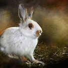 Woolie the Snowshoe Hare by Kay Kempton Raade