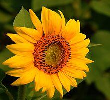 Good Morning Sunshine by jules572