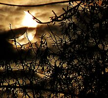 solar eclipse of January 4, 2011 by Ronny Falkenstein