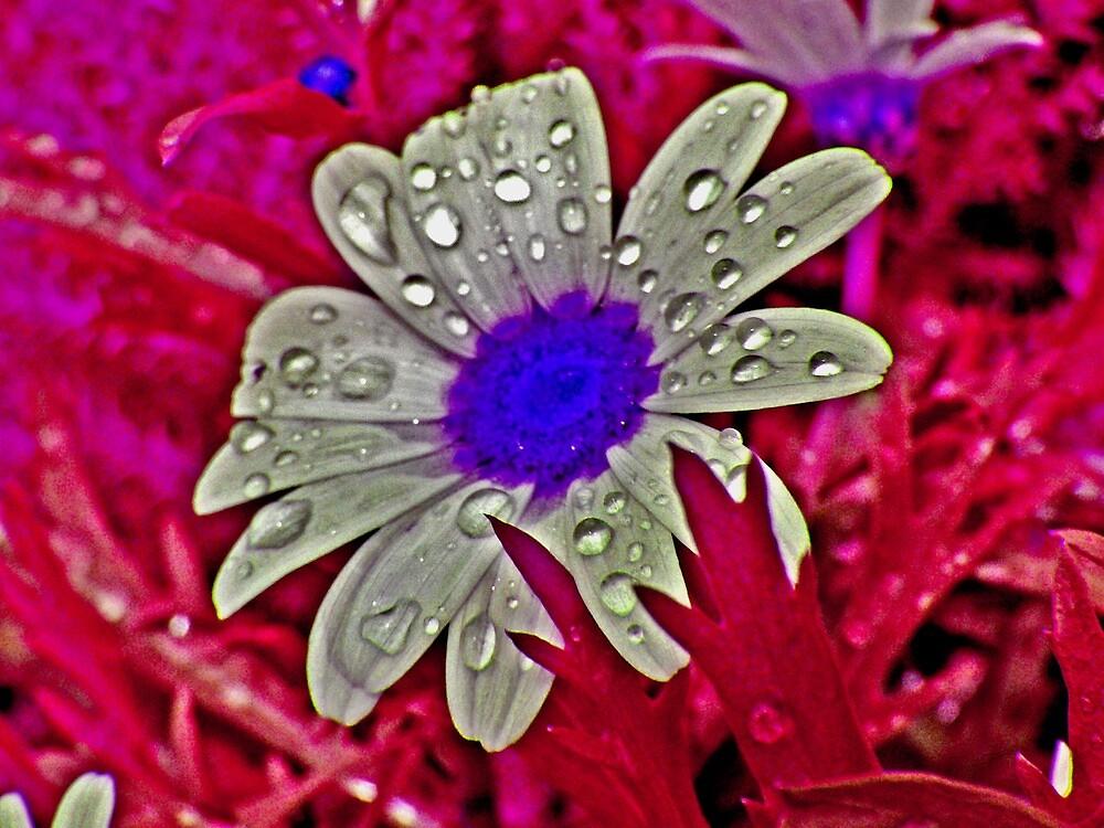 Flower Power by Adam Costello