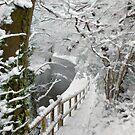 Canal walk by Lyn Evans