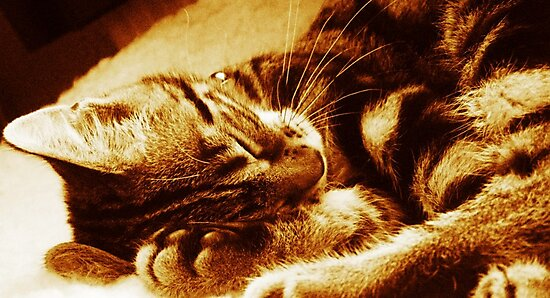 Sleepy Head by Ladymoose