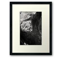 Host Tree Framed Print