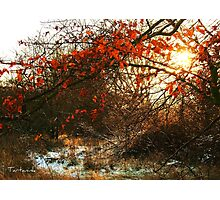 Autumn and Winter Photographic Print